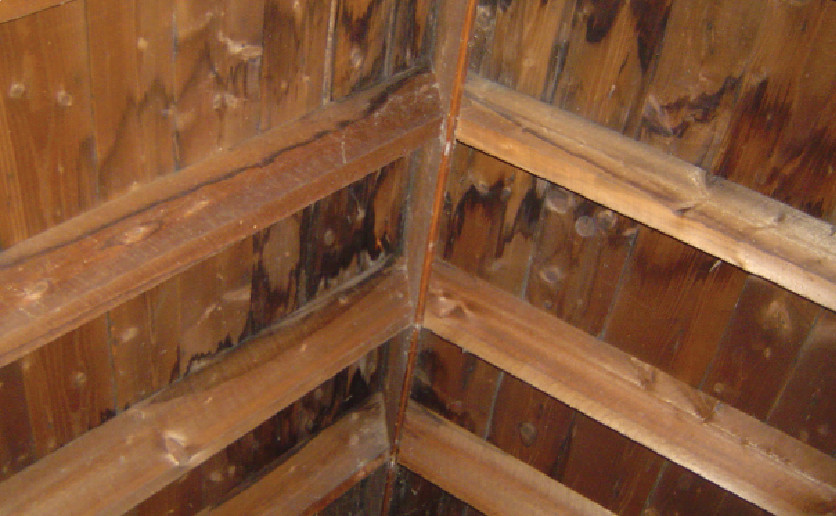 The sheathing of this roof is badly stained from leaks near the ridge. The sheathing and rafters will weaken over time and may need to be replaced.