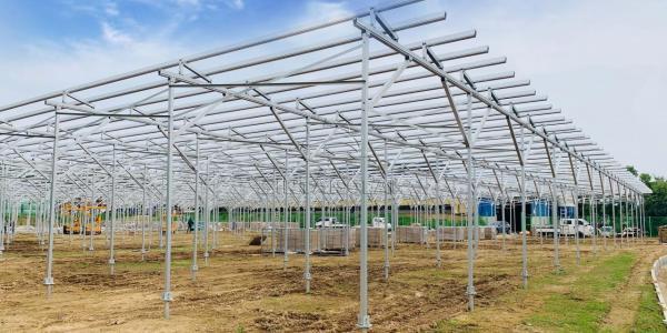 发电种植两不误,福建安泰新能源助力韩国农光互补光伏项目